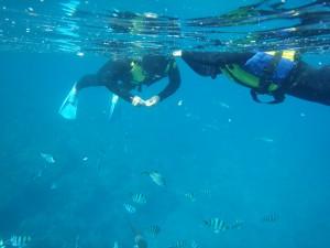 一起去沖繩的青洞浮潛!