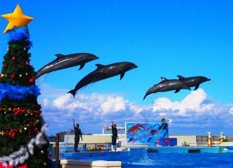 okinawa,沖繩,旅遊,畢業旅行,日本旅遊,家族旅遊,公司旅遊,畢業旅行,自駕游,優惠卷,自由行,沖繩推薦, 高cp值,海洋俱樂部gigi,景點,船潛,聖誕節, 海洋博公園 海豚劇場